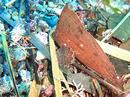 枯れ葉に隠れるツマジロオコゼ