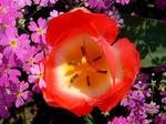 田舎暮らし不動産の花