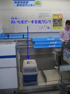itami3.JPG
