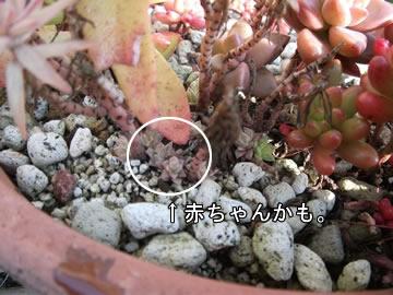 taniku_hi_ono_niji_05.jpg