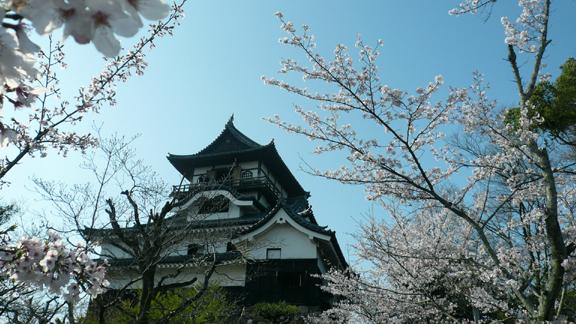 桜と犬山城