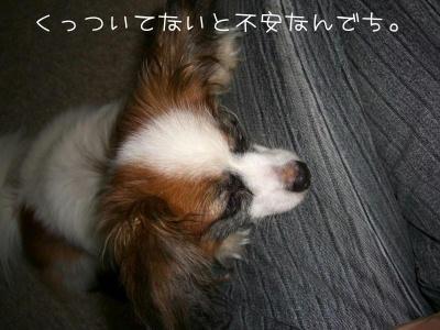 2006_7_1.jpg
