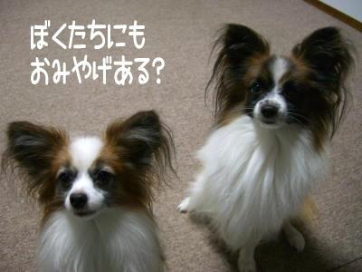 2006_12_15.jpg