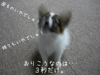 まだでしゅか〜〜〜!!!