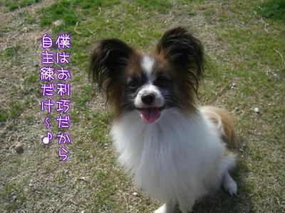 可愛い笑顔だ〜(* ̄∇ ̄*)