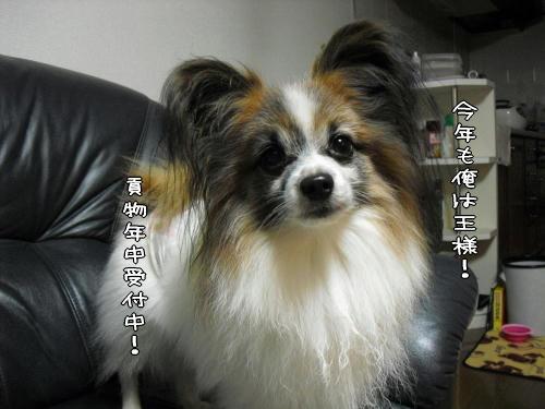 20110104004.jpg