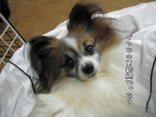 20110104009.jpg