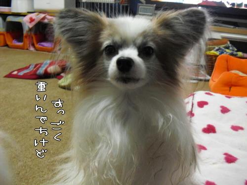20110114001.jpg