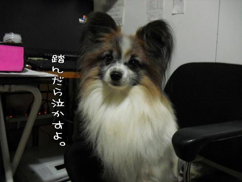 20110114006.jpg