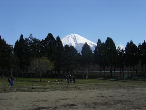20081206_asagiriFDG01.jpg