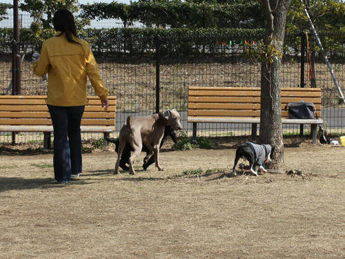 20090310_jonanjima_roku08.jpg