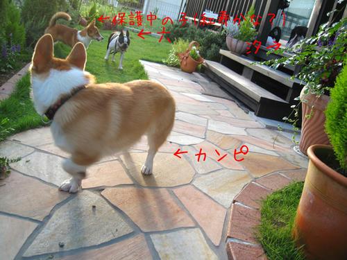 20090725_shirako16.jpg