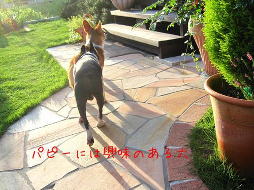 20090725_shirako17.jpg