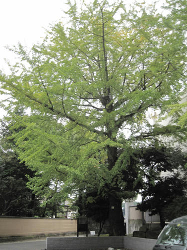 20091024_yanesen95.jpg