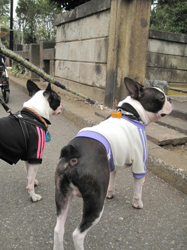20091024_yanesen73.jpg