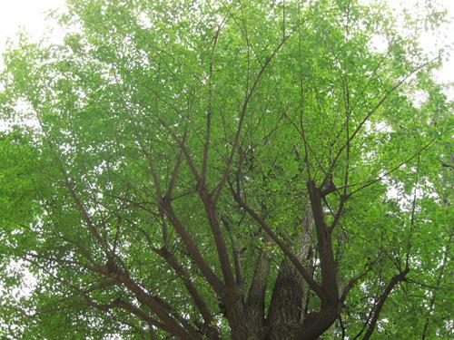 20091024_yanesen28.jpg