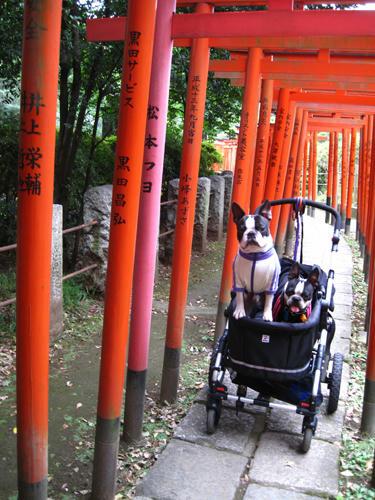 20091024_yanesen24.jpg