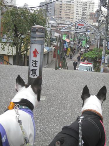 20091024_yanesen08.jpg