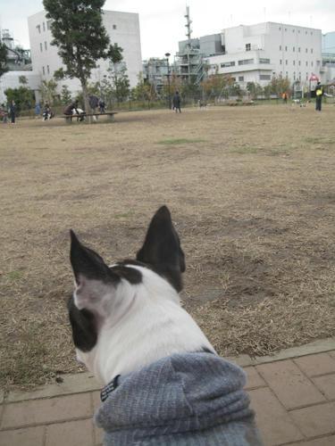 20091205_jonanjima05.jpg