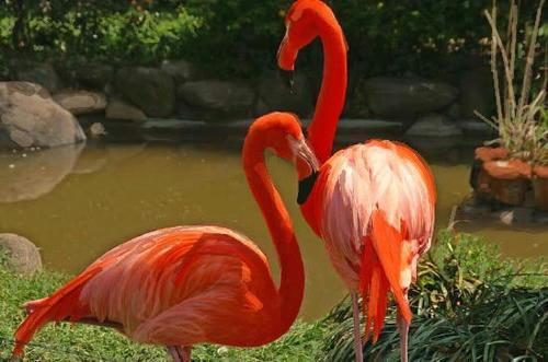 i-d6-furamingo5.jpg