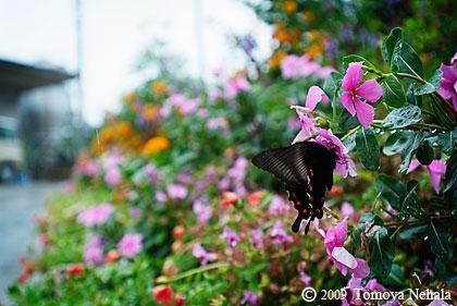 雨の日の蝶