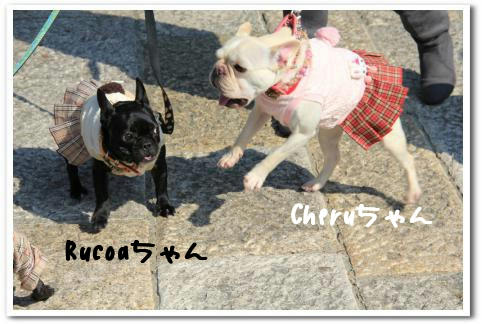 Rucoaちゃん&Cheruちゃん