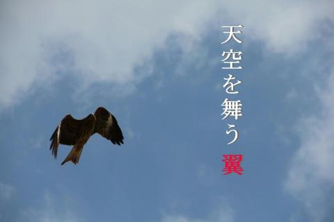 天空舞う翼