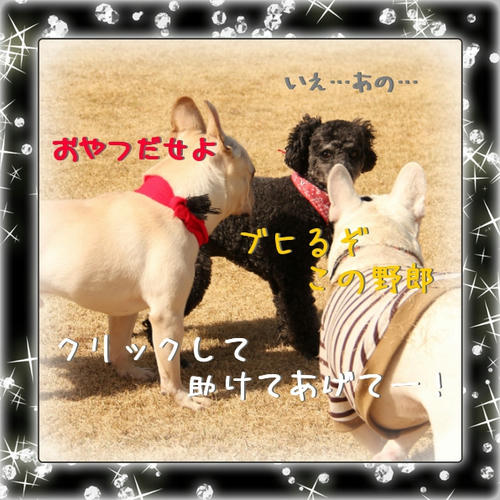 ダメだこりゃ(/_;)
