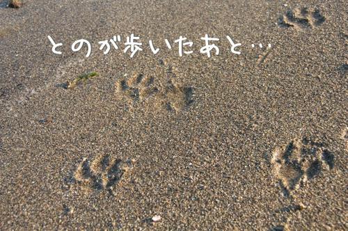 砂浜にてんてんと…