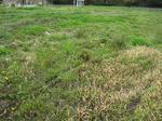 新しい畑。