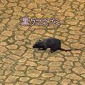 kurokumanezumi.jpg