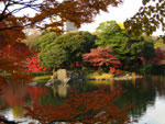 小石川後楽園の紅葉 - 其の一