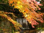 小石川後楽園の紅葉 - 其の二