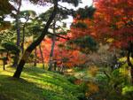 小石川後楽園の紅葉 - 其の三