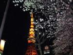 桜と東京タワー - 夜