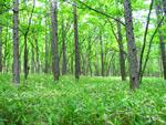 静寂と御伽の森の中
