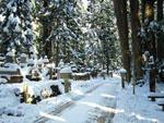高野山 奥之院への雪の参道