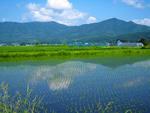 遠野の田園風景