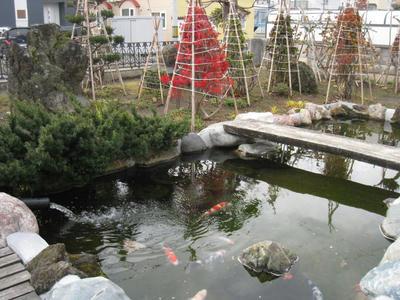 庭のコンクリート池