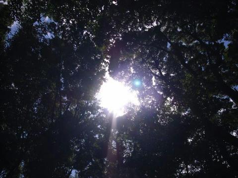 木の間から