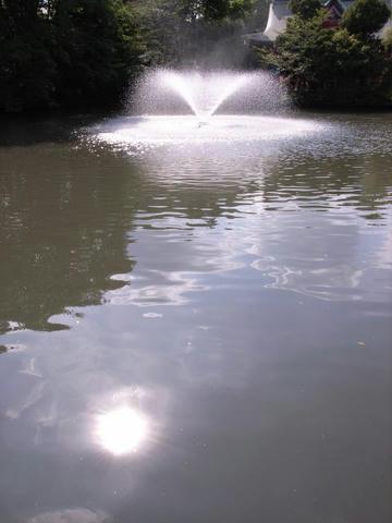 池に落ちて