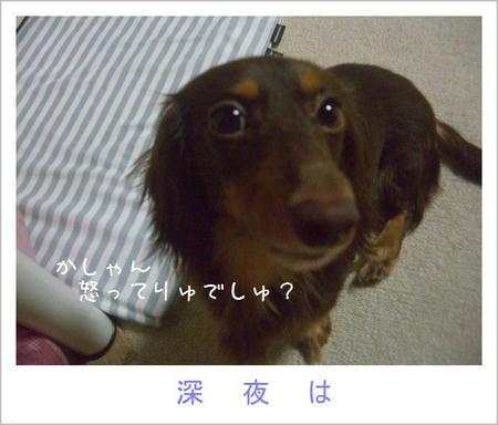 CIMG2398.JPG