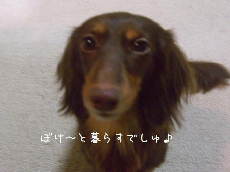 CIMG4163.JPG