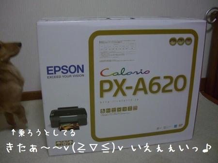 CIMG5185.JPG