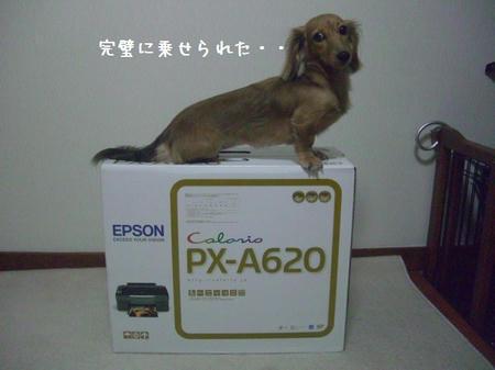 CIMG5186.JPG