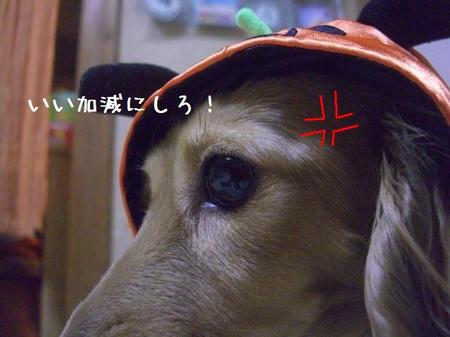 CIMG5462.JPG