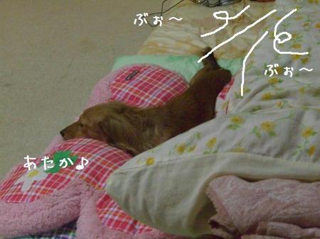 CIMG6907.JPG