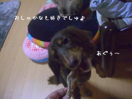CIMG8719.JPG