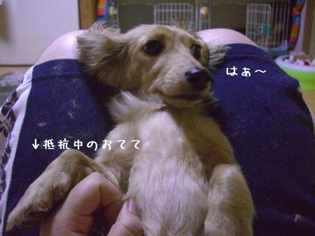 CIMG8969.JPG