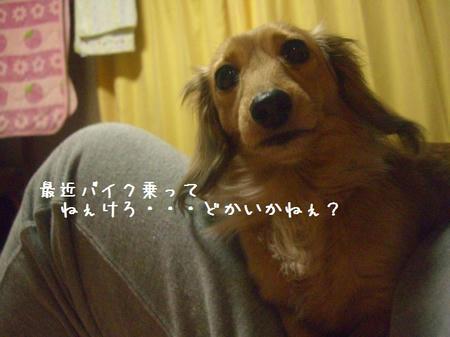 CIMG9873.JPG